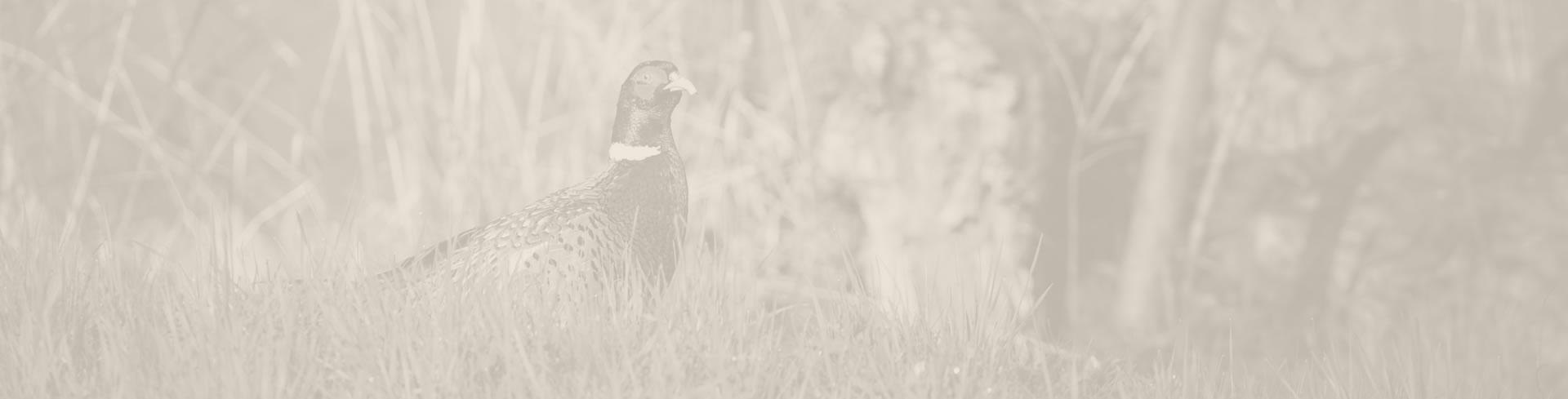 Pheasant Preserve - Dead End Pheasant Farm - Almont, MI