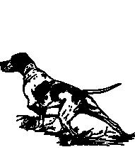 Pheasant Dog Training - Almont, MI