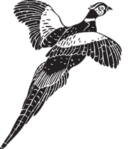 Pheasant Hunting Preserve - Almont, Michigan