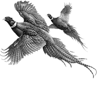 Dead End Pheasant Farm - Almont, MI